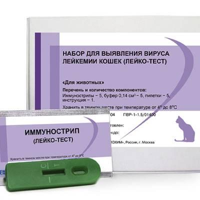 Вирус иммунодефицита у кошек: симптомы, как передаётся, лечение