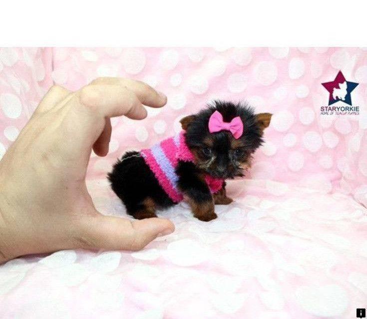 Топ-15 самых милых пород собак в мире