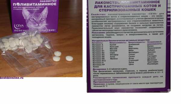 Витамины для котов. какие нужны и как правильно применять?