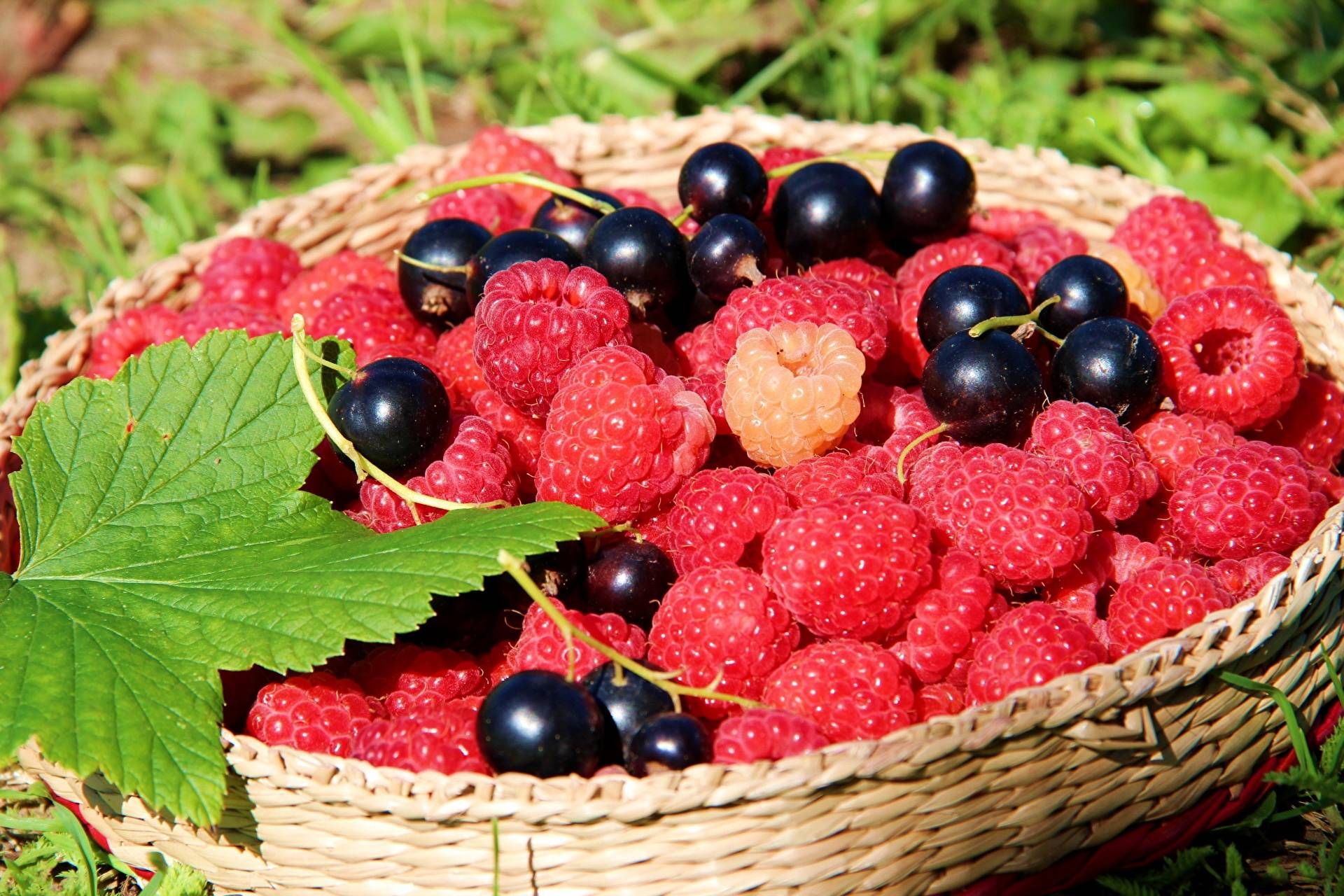 Прошу совета (саженцы черешни и абрикоса)