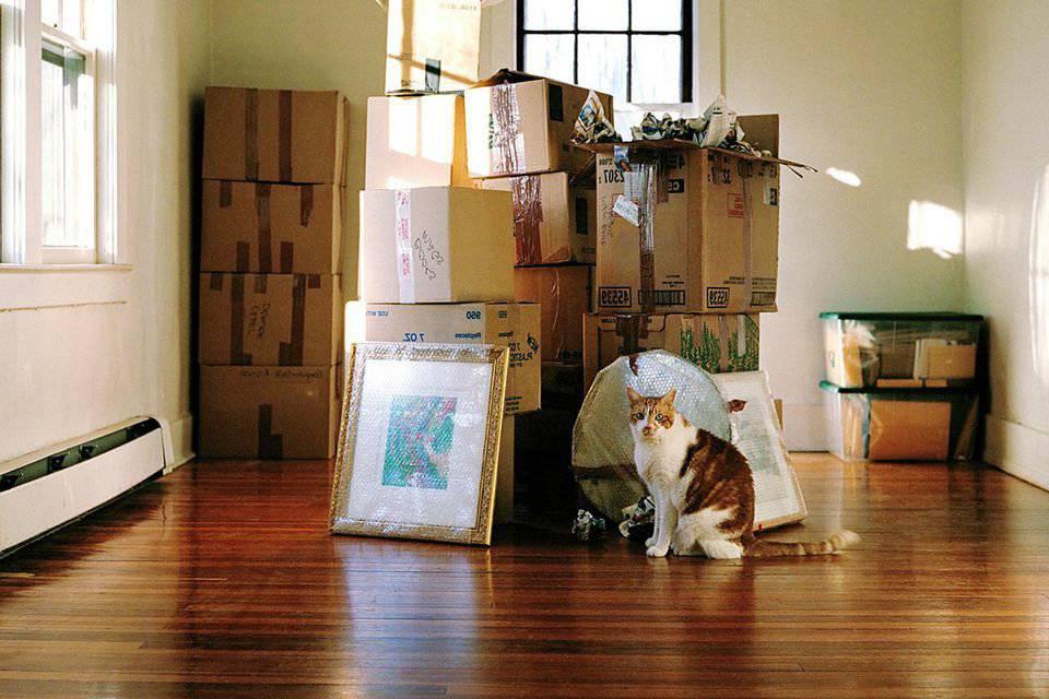 Переезд в новый дом — стресс для кошки?