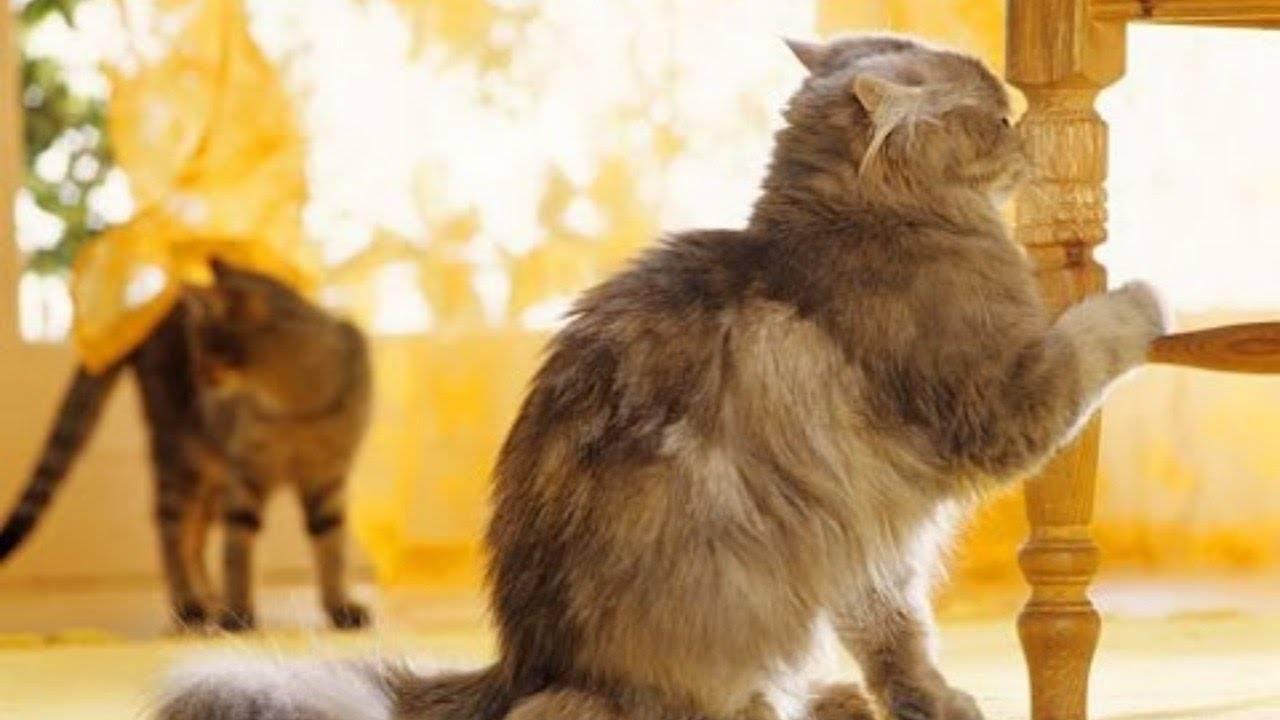 Кот метит территорию или гадит: как отучить, возможные причины и способы их устранения, могут ли метить кошки и кастрированные коты