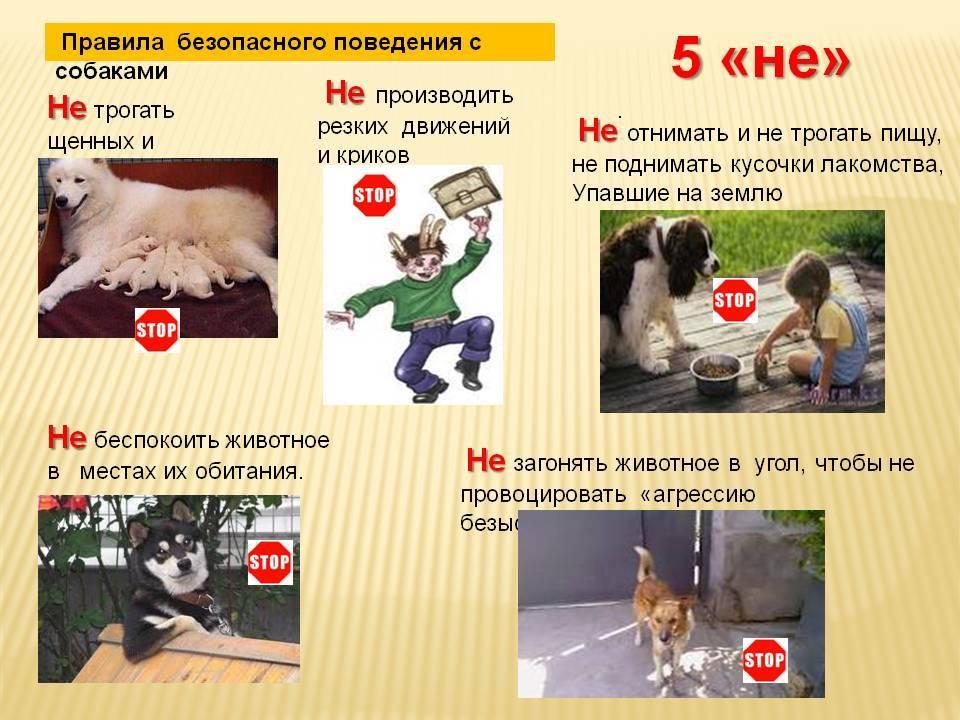Как дрессировать собаку из приюта