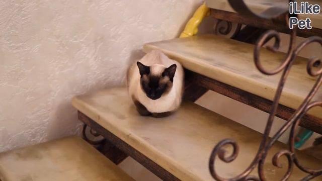 Как часто подстригать когти кошке в домашних условиях