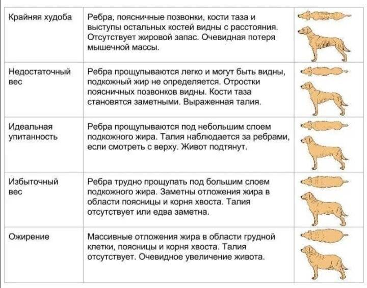 Чем кормить щенка в 2 месяца: натуральный или промышленный рацион