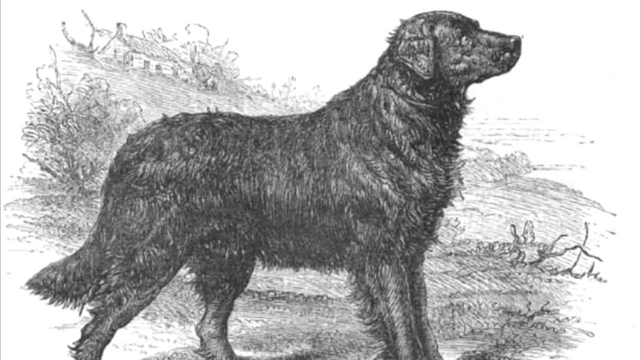 Топ-30 самых опасных собак в мире