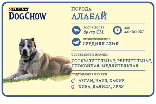 Алабай: вес и рост в холке взрослого кобеля, сколько весит щенок в 3, 4 и 7 месяцев и до каких размеров вырастает