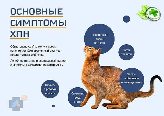 Гастрит у кошек: симптомы и лечение в домашних условиях