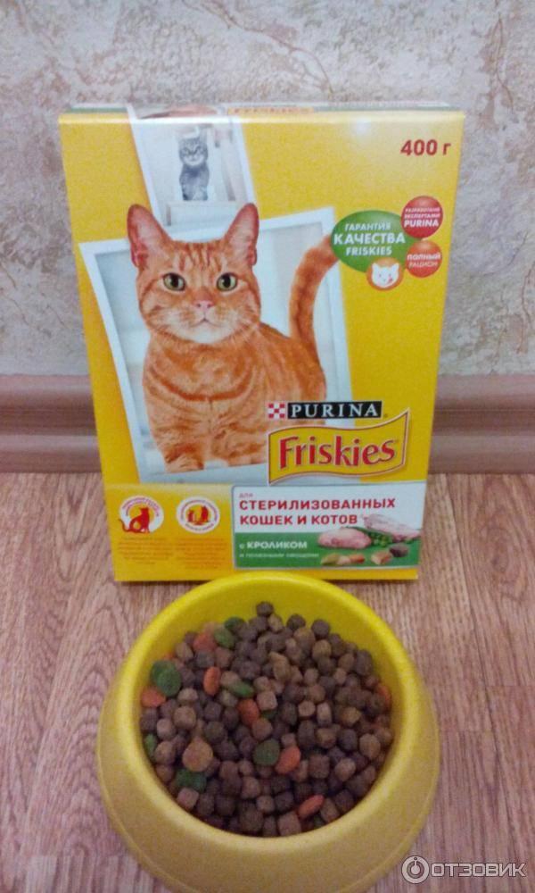 Как кормить стерилизованных кошек: полезные и нежелательные продукты
