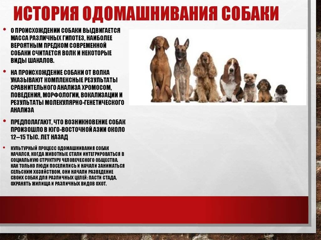 Самая древняя порода собак в мире — история появления