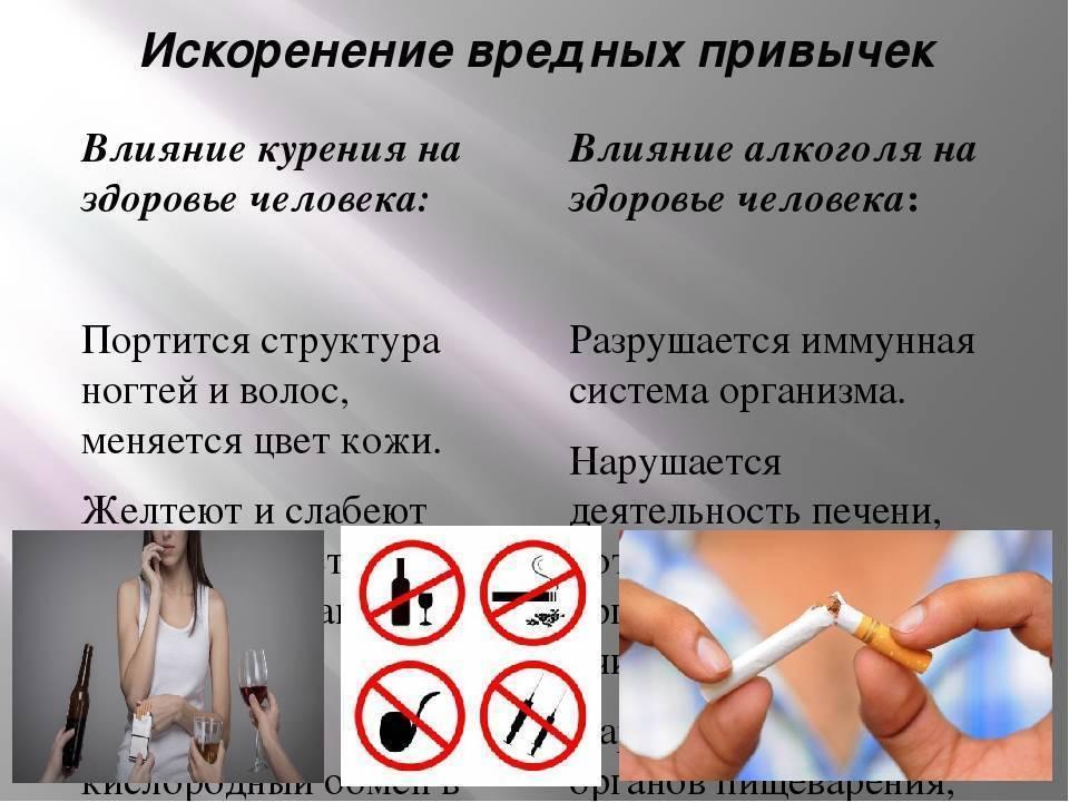 Чем нельзя кормить кошек, опасные и вредные продукты - puirna.ru