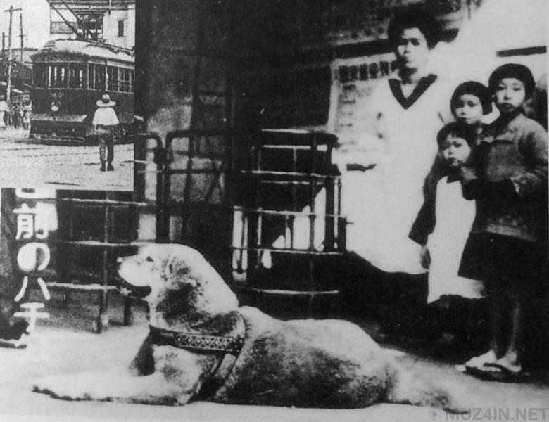 Акита - порода собаки из фильма хатико | сайт о домашних животных