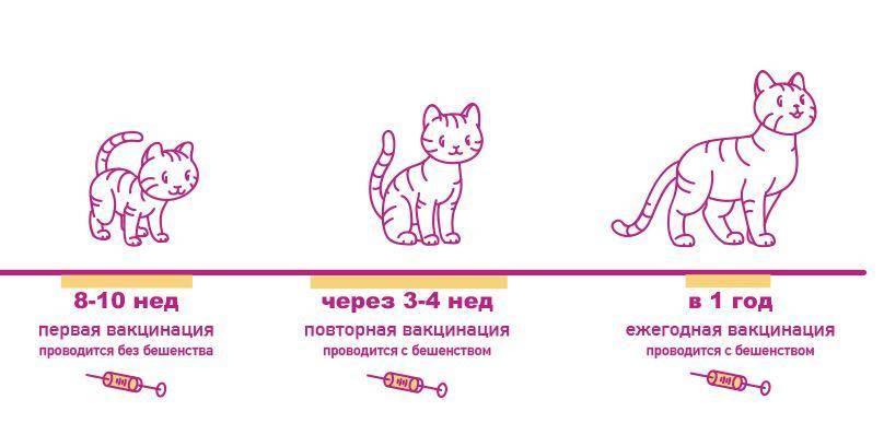Как часто нужно глистогонить кошку? лямблиоз и токсоплазмоз.