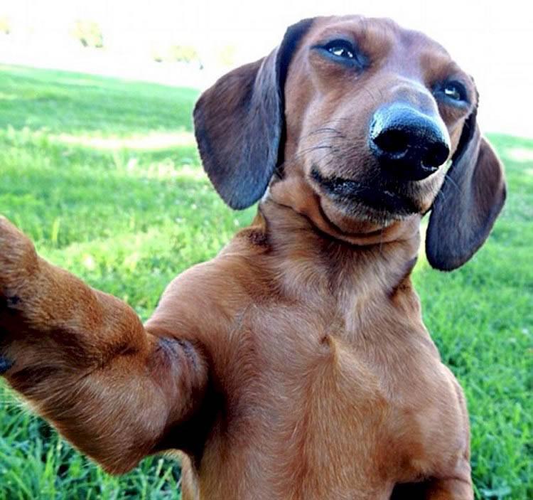 Топ-11 самых смешных собак в мире