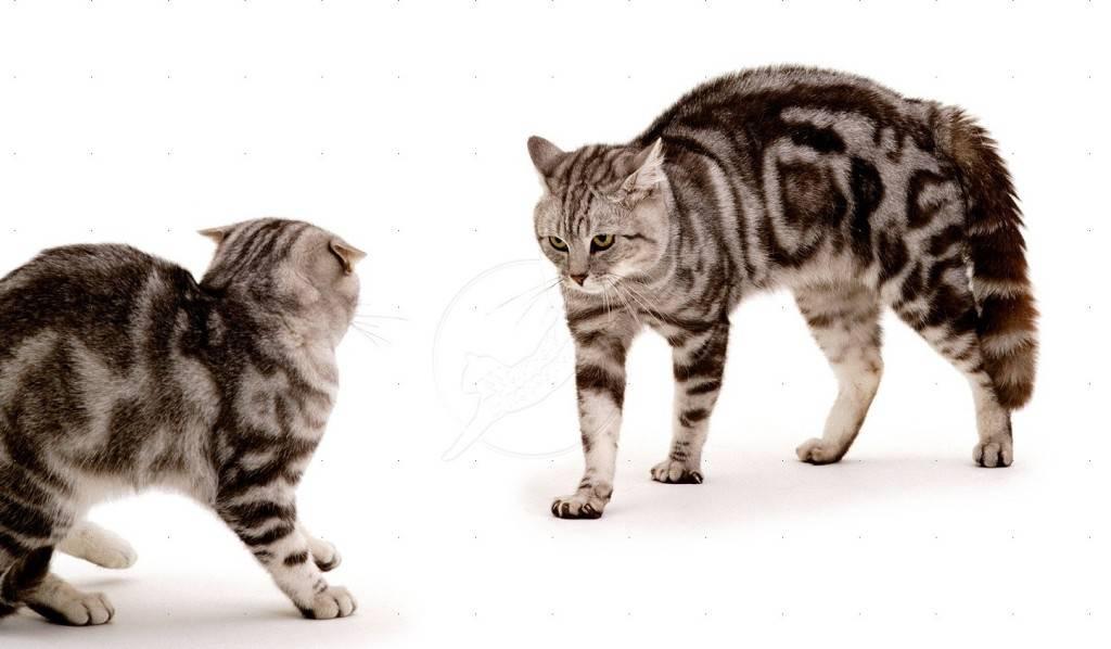 Почему кот стал агрессивным: причины агрессии и ее проявления