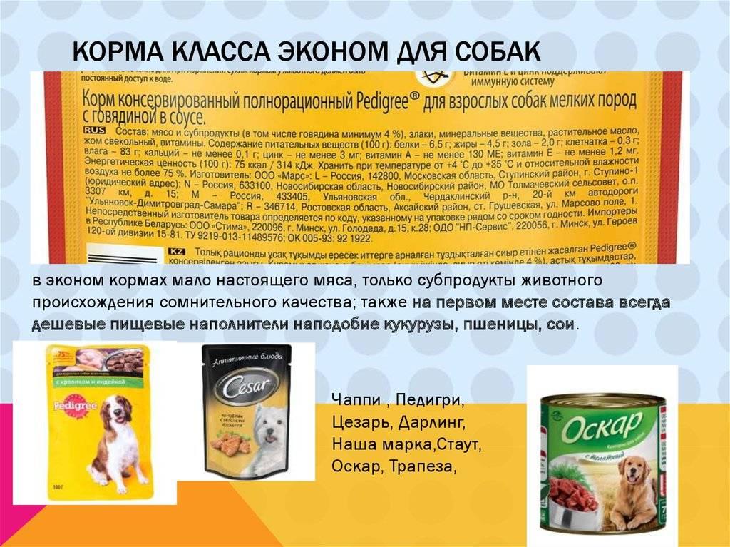 Классы кормов для собак - описание, список марок, сравнение и рейтинг - petstime.ru