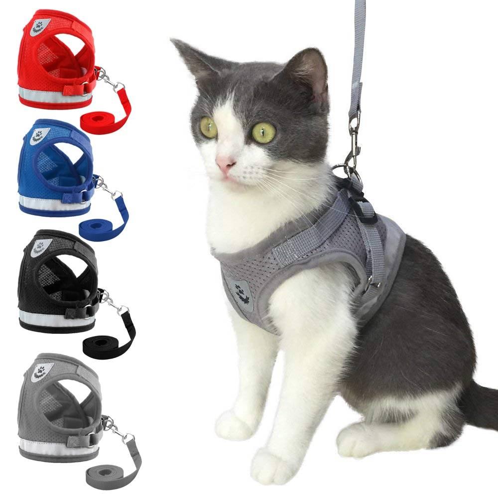 Ошейники для котов: выбираем аксессуар для четвероногих любимцев
