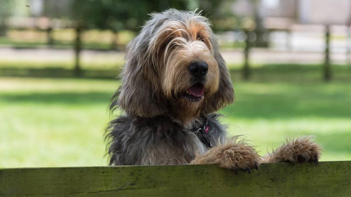 Гончие породы собак: описание, классификация, в чем преимущества,