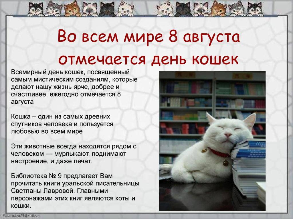Когда отмечают день кошек в 2019 году в россии: дата праздника и история