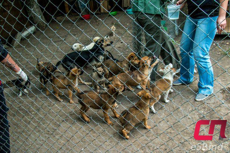 Четвероногий тендер: как защитники животных работают с госконтрактами :: рбк тренды