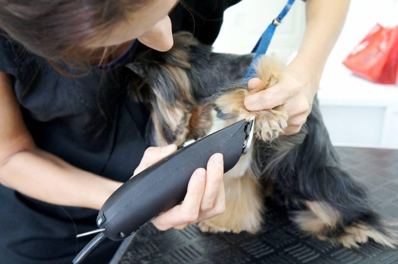 Можно ли стричь усы собак