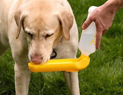 Площадка для выгула собак (26 фото): нормы и правила организации собачьих площадок для тренировки, необходимое оборудование и требования к размерам