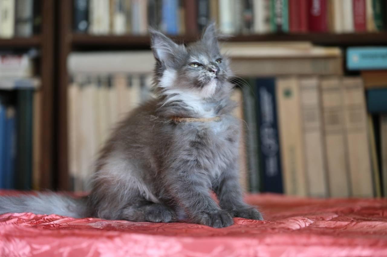 Благородные беспородные: кто такие кошки-метисы