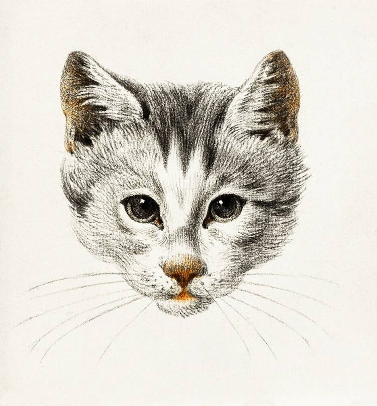 Простой способ научиться рисовать домашнего кота карандашом поэтапно