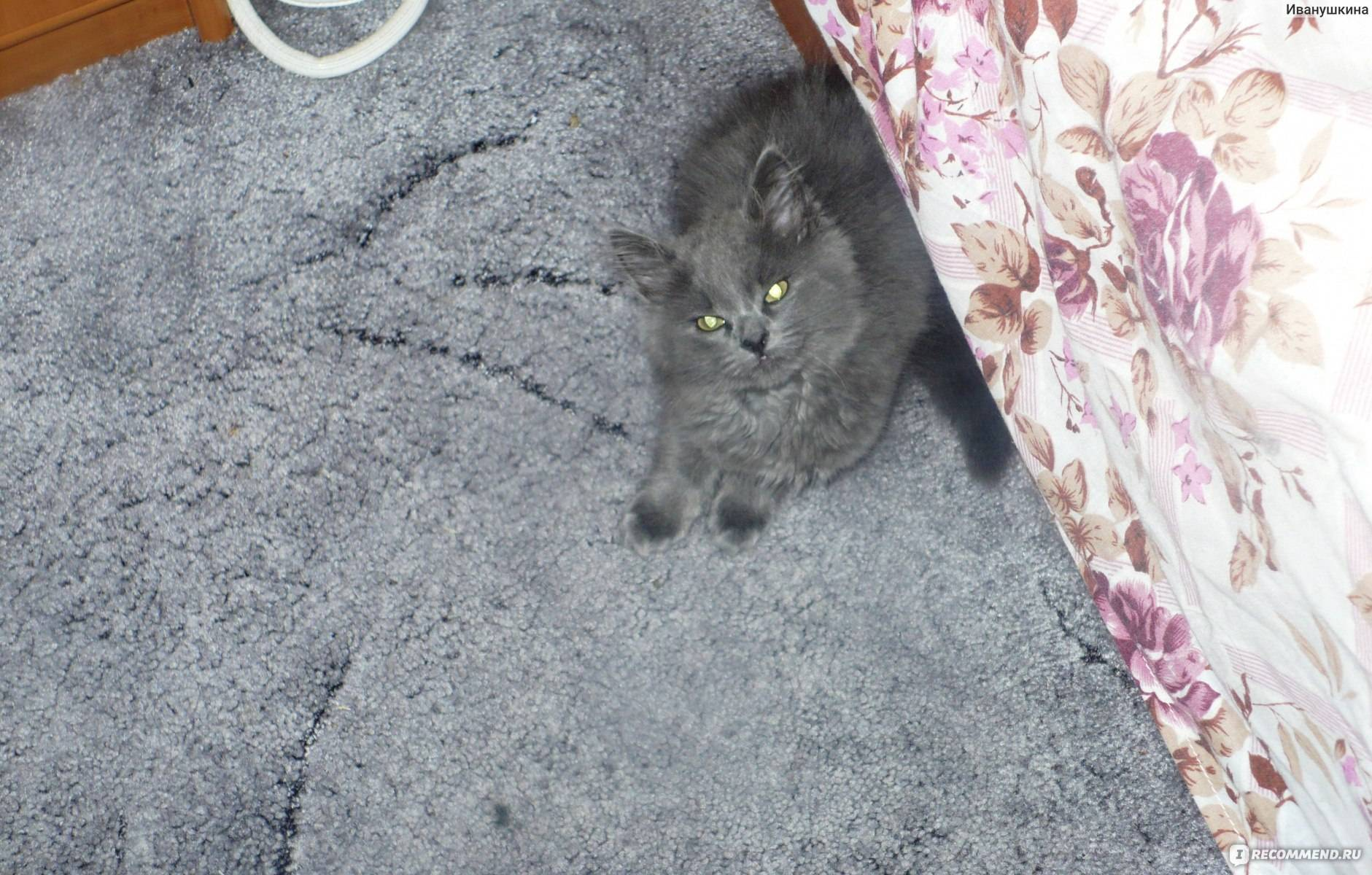 Дворовая кошка: беспородные коты, фото и описание характерных черт