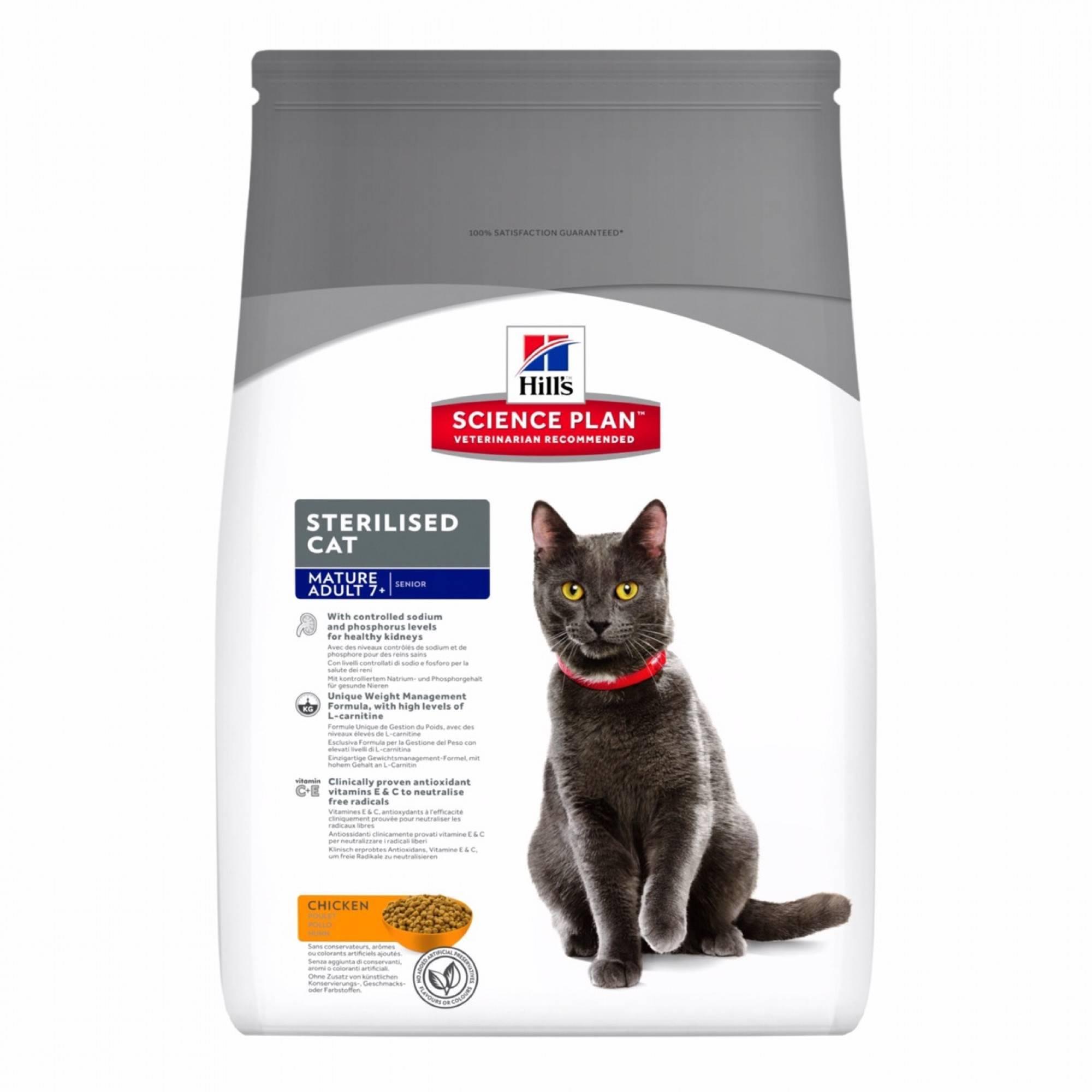 Особенности питания и кормов для беременных и кормящих кошек | hill's pet