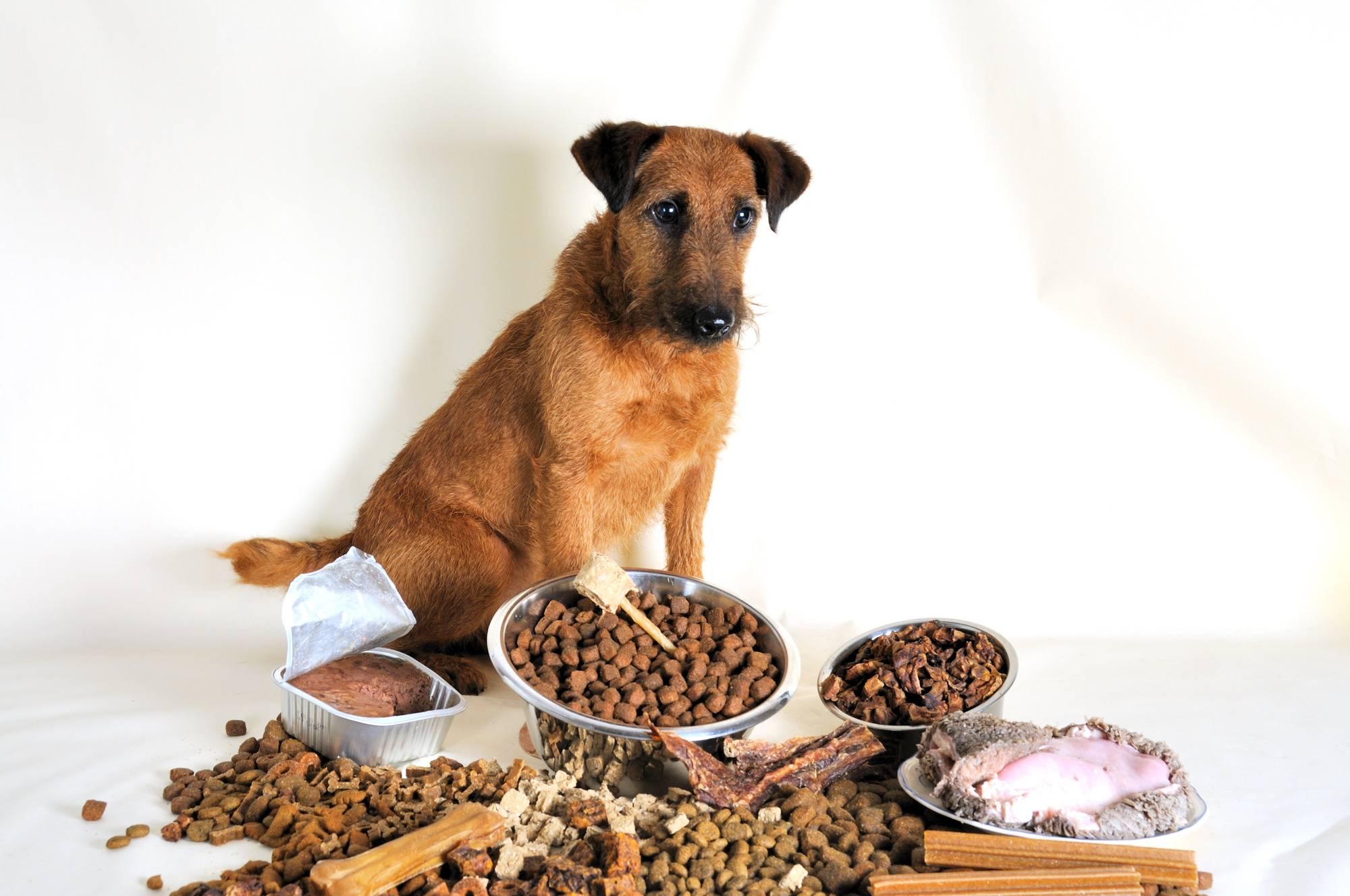 Почему собака не ест сухой корм — что делать, чем кормить собаку, если она не хочет есть сухой корм, отказывается после натуралки