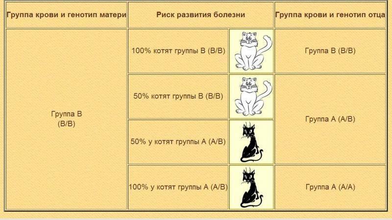 Группы крови у кошек | http://creambel.com