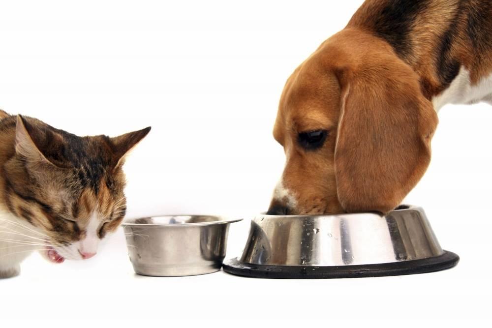 Что будет, если здоровое животное начнет питаться лечебным ветеринарным кормом