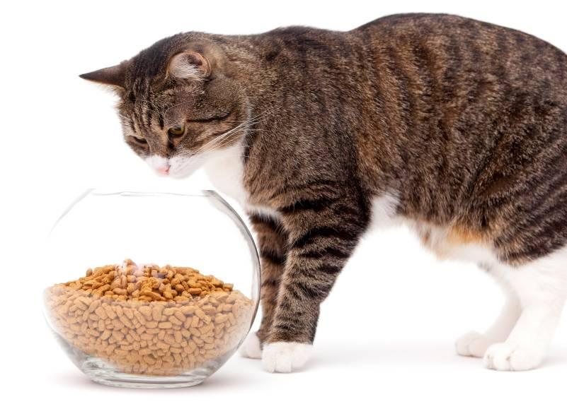 Натуральное кормление кошек