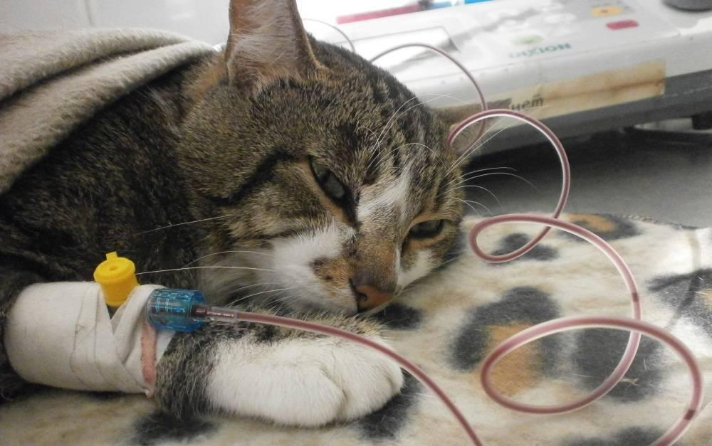 Остеоартроз и артрит у собак и кошек — симптомы и лечение