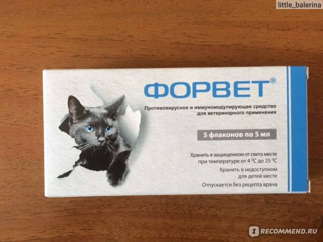Раствор для инъекций «форвет»: как колоть кошкам и собакам