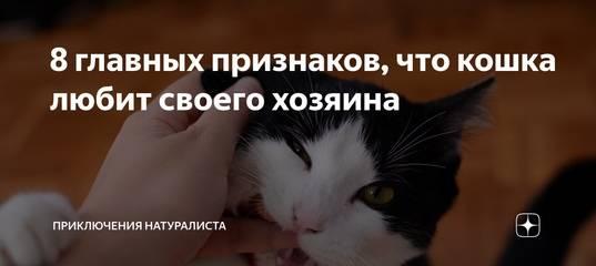 15 раздражающих признаков того, что кошка признается человеку в любви   bomba.co