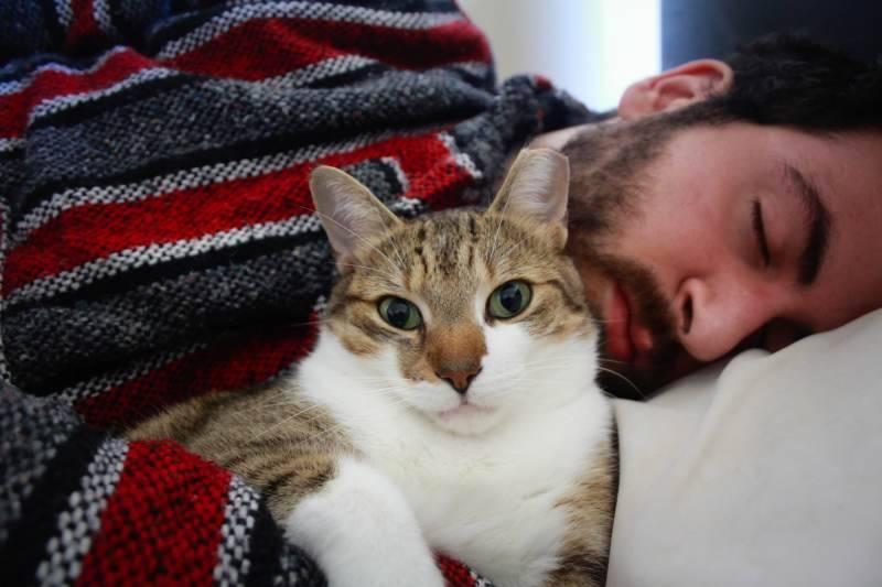 Специалисты рассказали, что происходит со здоровьем, когда ваш кот спит с вами
