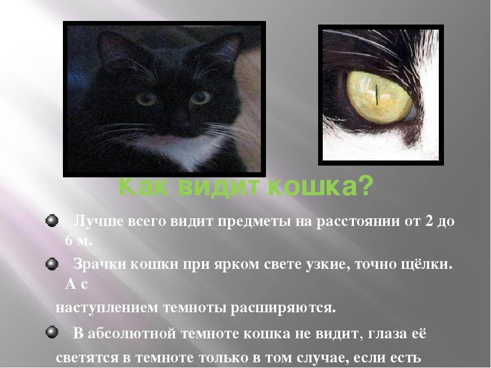 Какие цвета видят кошки: особенности кошачьего зрения