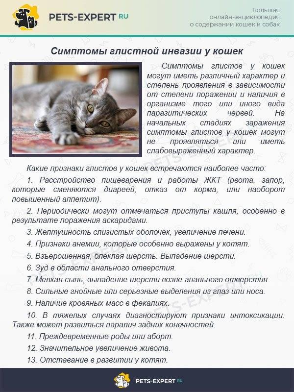 Роды у кошкироды у кошки