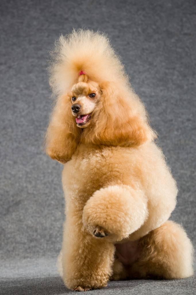 Топ-10: самые умные породы собак с фото и описанием