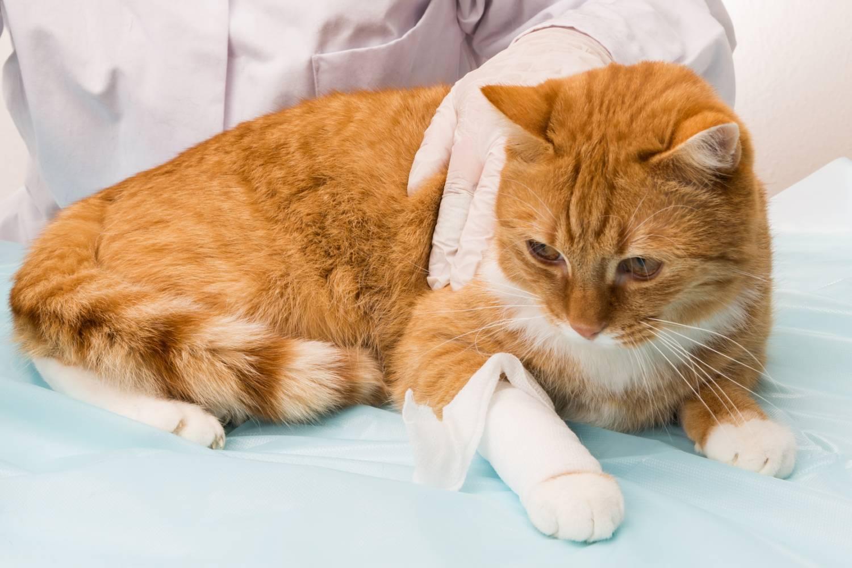 Отравление собаки крысиным ядом симптомы и лечение