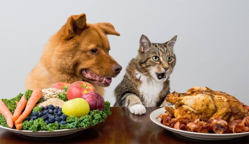 Чем нельзя кормить собаку: 25 самых опасных продуктов
