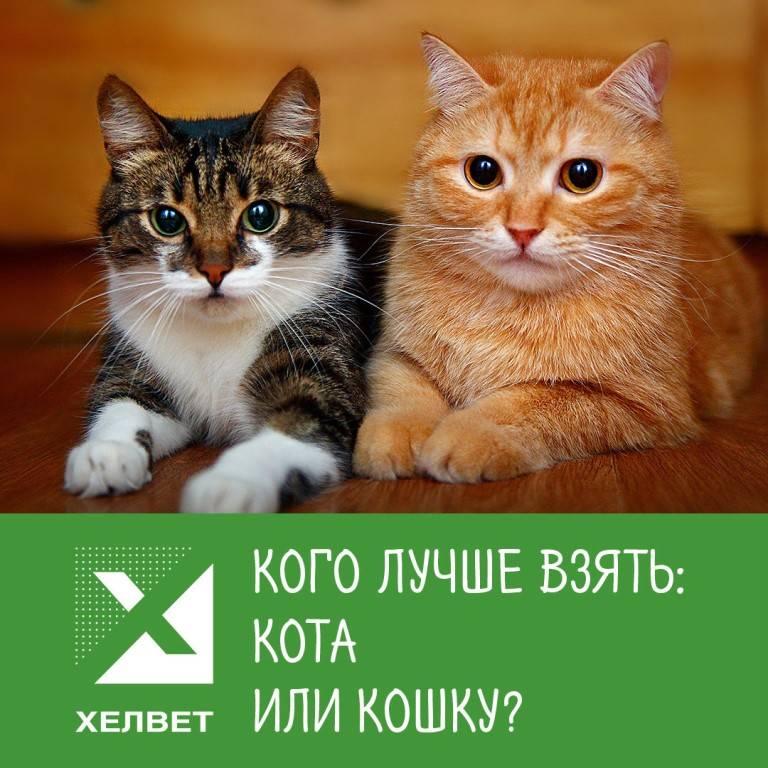 Кого лучше завести дома – кота или кошку?