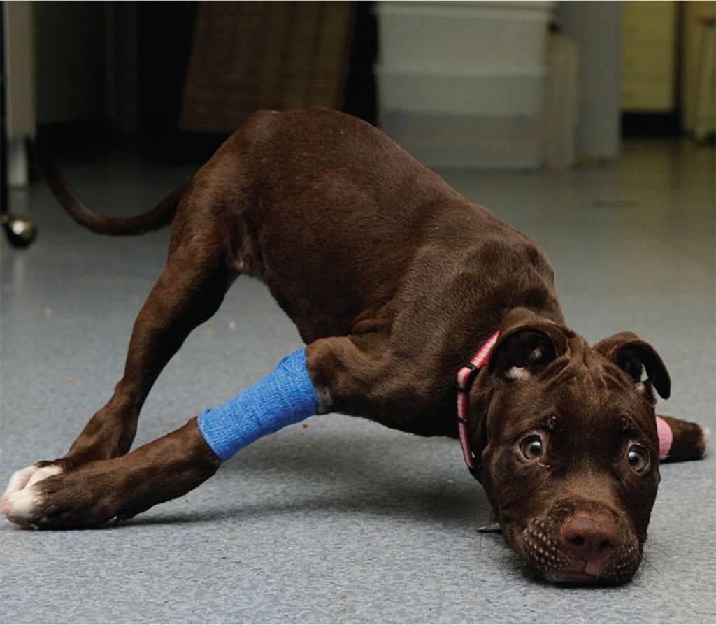 """Инсульт у собак - признаки инсульта, последствия, лечение инсульта у собак в москве. ветеринарная клиника """"зоостатус"""""""