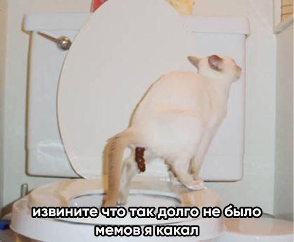 Воспаление параанальных желез у кошки