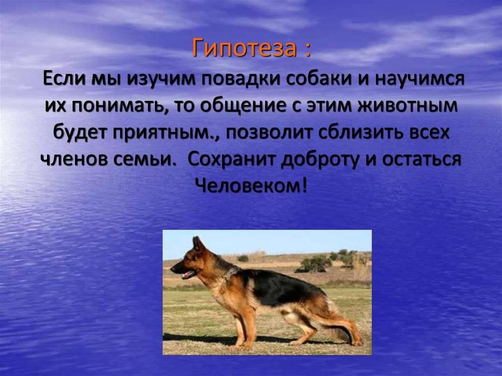 Понимают ли собаки, о чем говорит человек: мнение ученых, кинологов, зоопсихологов и ветврачей