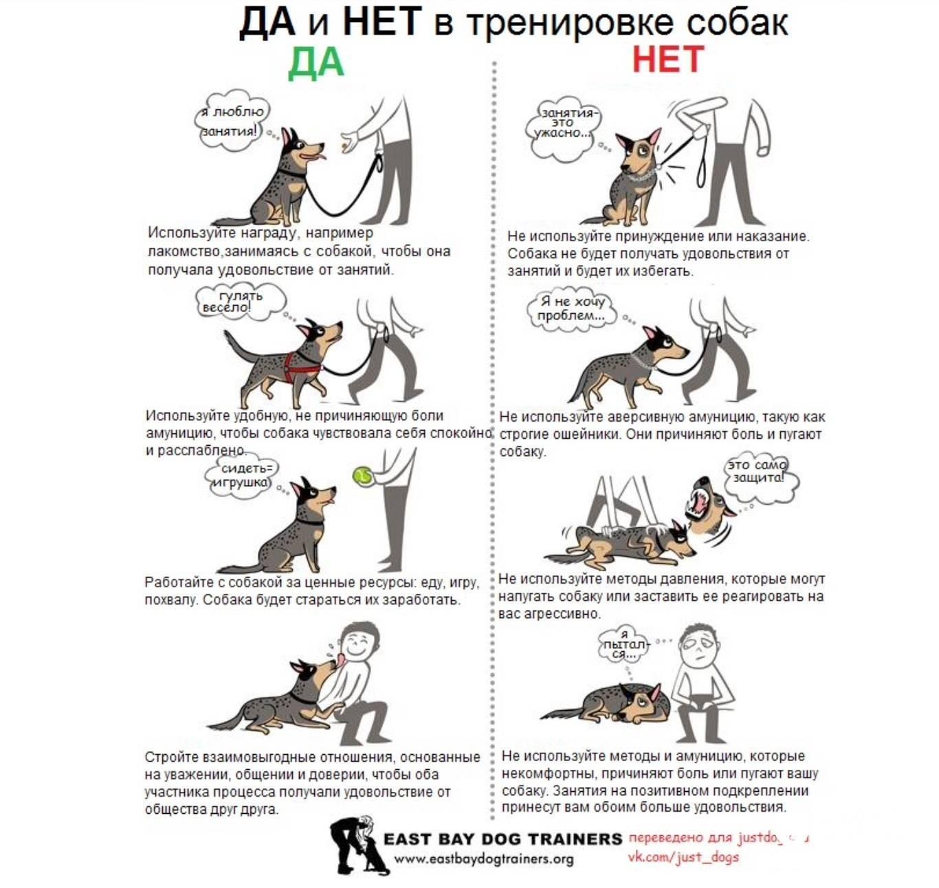Что нужно знать о дрессировке собак в домашних условиях?