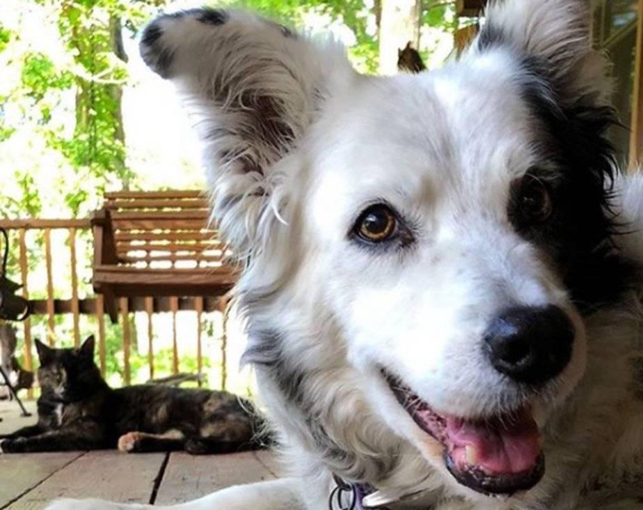 Топ 10 самых умных пород собак в мире: рейтинг на фото