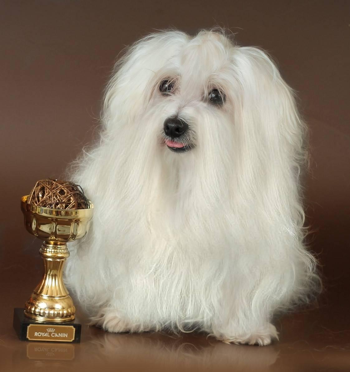Декоративные породы собак с фотографиями, названиями и характеристиками